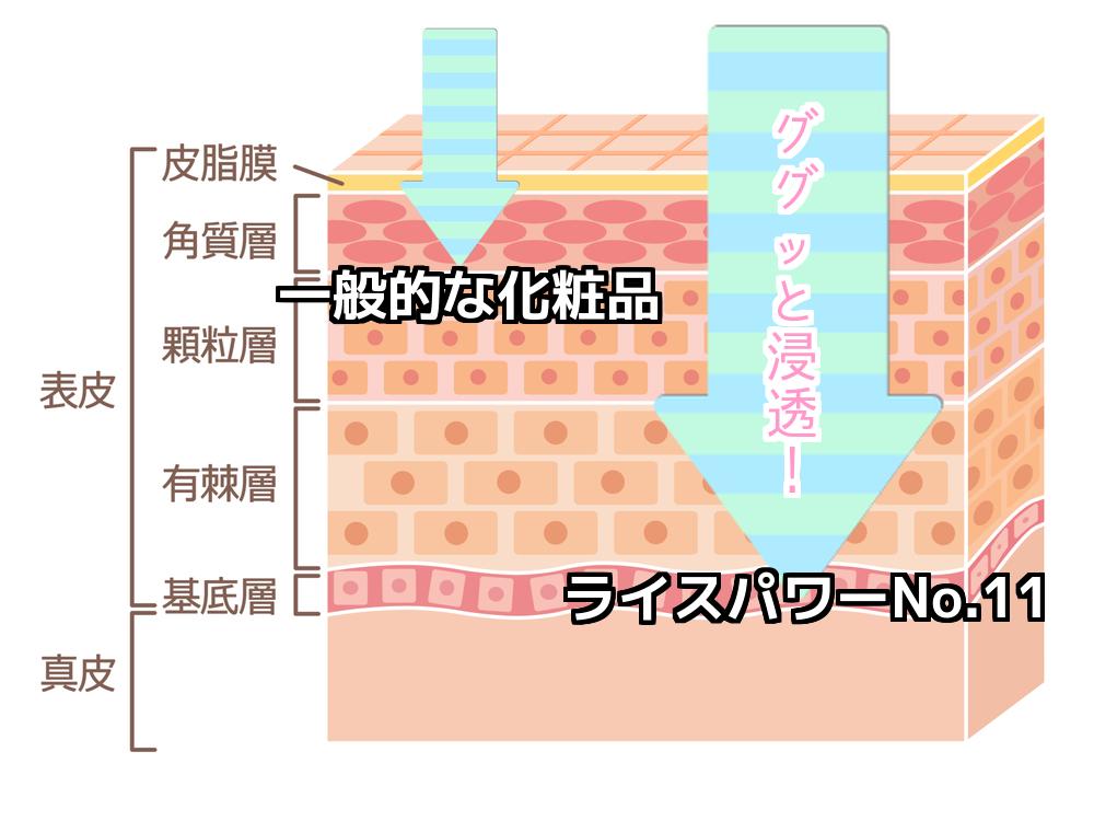 米肌と一般的な化粧品の浸透度の違い