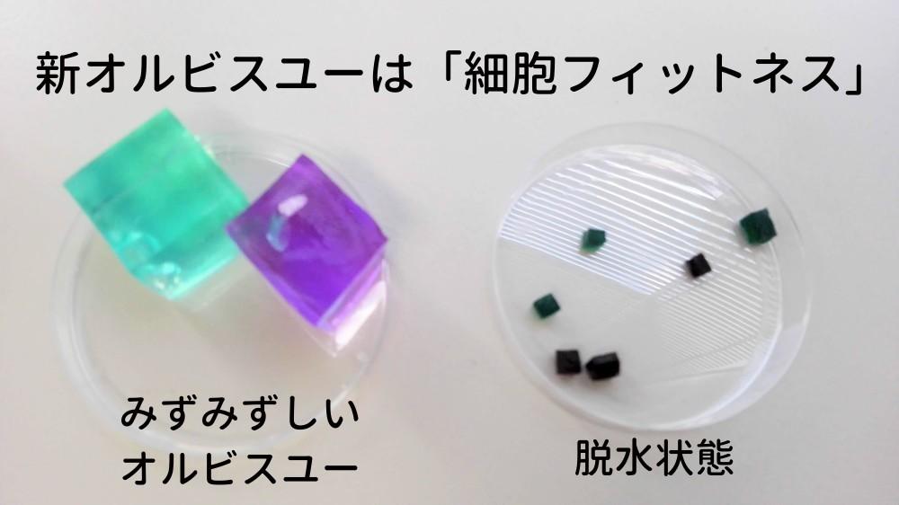 オルビスユーのコンセプト「細胞フィットネス」を表したサイコロ型の細胞模型